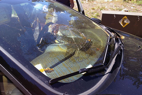 Windshield blown out by bear spray