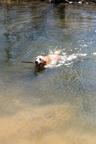 Jake swimming in the river
