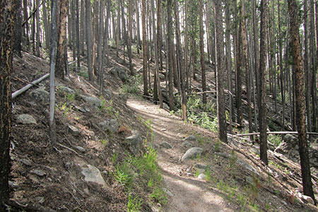 trail climbing through pines toward a ridge