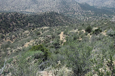 La Luz trail's lower slopes