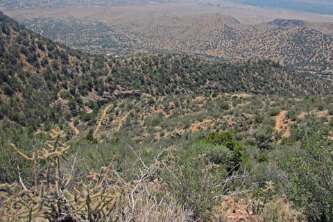 the lower La Luz trail on Sandia Mtn