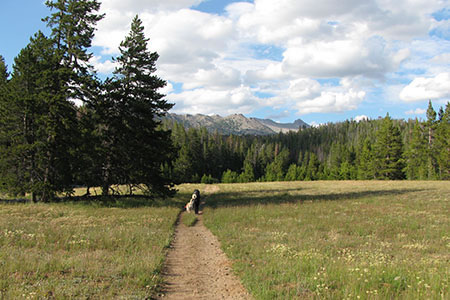 Amy and Augie crossing a meadow on a wide trail