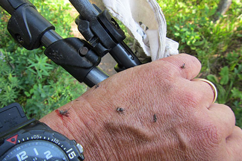swatted mosqutioes on my hand