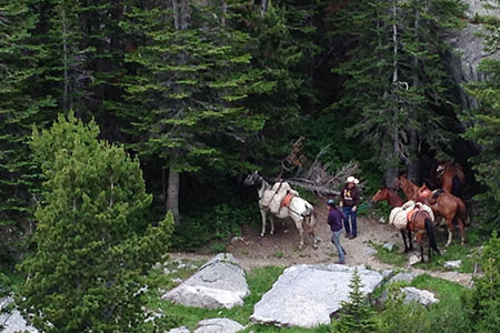 Pack horses to the side of the trail