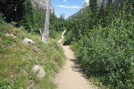 trail through Cascade Canyon