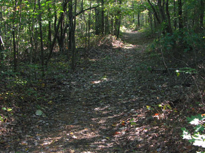 Trail at Beaman Park