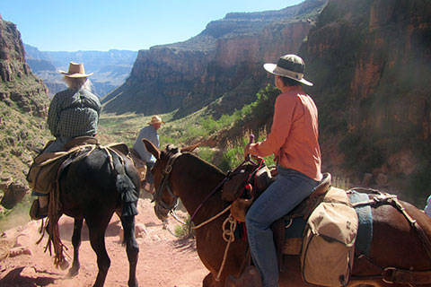 Mule riders descending into Grand Canyon