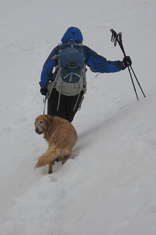 Jake crossing a snow slope on leash